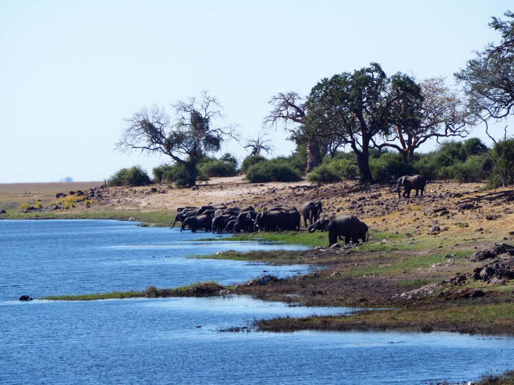 The epic Chobe River lined with elephant