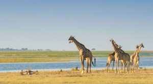 Our Chobe Travel Guide