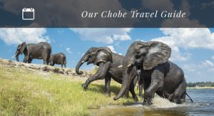 our-chobe-travel-guide-home