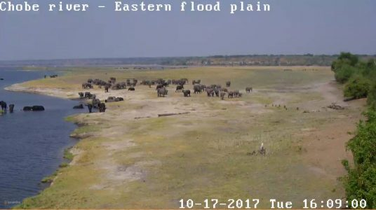 chobe game lodge webcam oct 2017