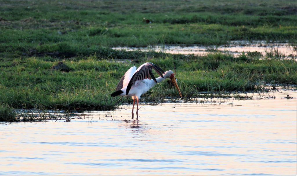 Birding on the banks of the Chobe River with Chobe Game Lodge